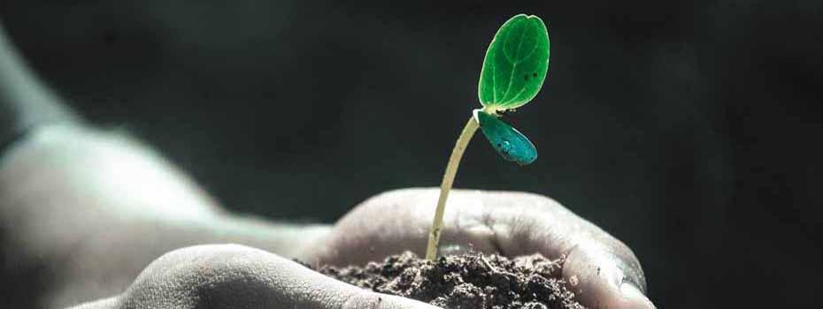 <blockquote><h3>Gesundes Leben, schmerzfrei</h3>Wie diese Pflanze will unser Körper immer gesund bleiben. Lassen Sie Ihren Körper in Freude leben. Helfen Sie ihm richtig, wieder gesund zu werden, wenn er durch SIE leidet.</blockquote>