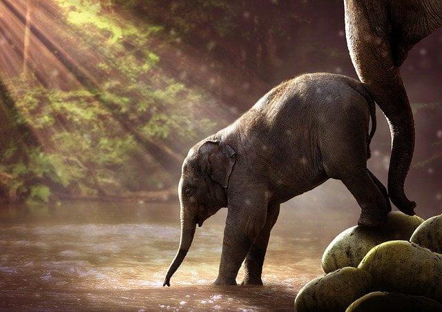 elephant 2380009 640